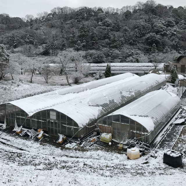 和歌山では珍しい雪